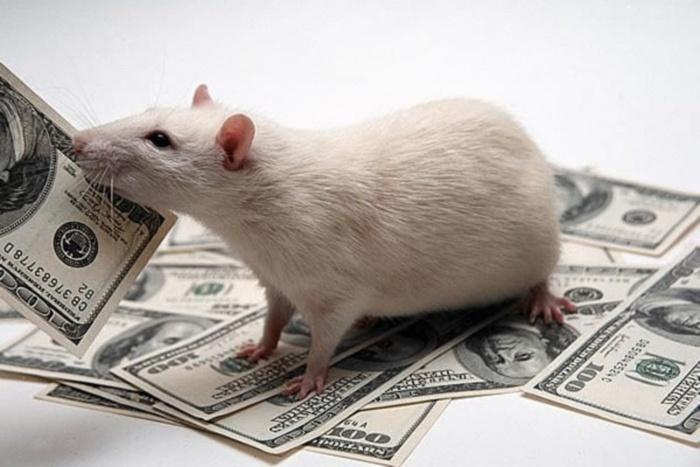 Гороскоп на 2016 год для Крысы