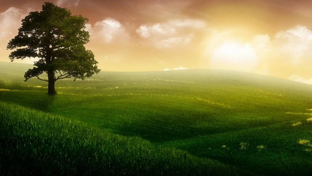 Общая характеристика для людей, принадлежащих к элементу земля. Учимся жить по фэн-шуй (Часть 1)