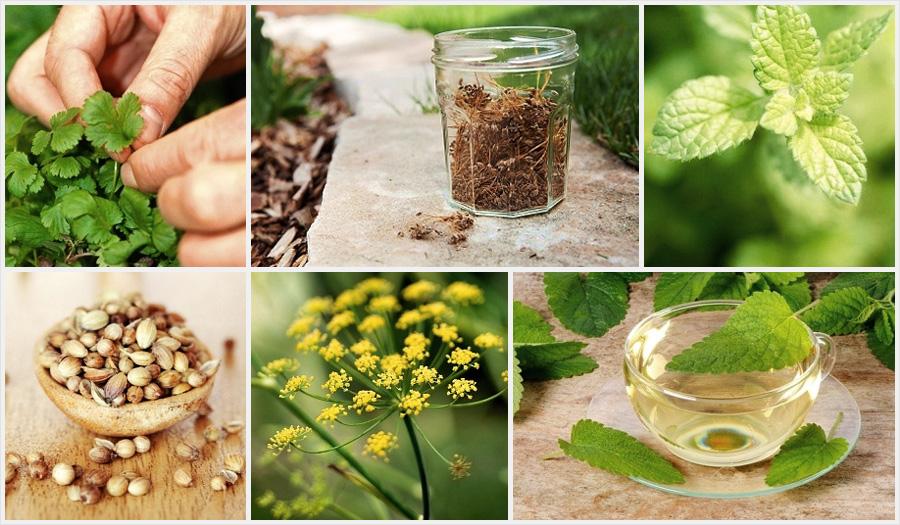 Основы магии растений