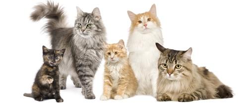 Кошки - магические животные