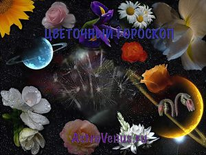Какой цветок подходит по знаку зодиака
