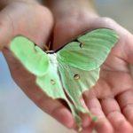 Популярные приметы: бабочки - символы и рекомендации