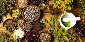Магические растения: как использовать энергетику растений и их магические свойства с пользой для дома и семьи