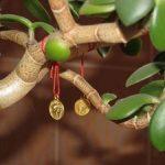 Приметы, связанные с комнатными растениями: защита, любовь, дом